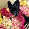 Le Bouquet Floristry