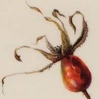 Denise Walser-Kolar, Botanical Artist