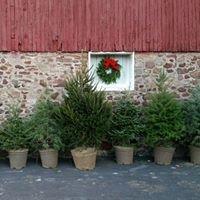 County House Christmas Trees