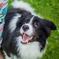 Psia Kość - szkolenie psów w Skoczowie