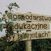 """Gospodarstwo Edukacyjne"""" W labiryntach"""""""