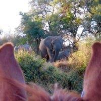 African Big Five Horse Safari