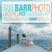 Sue Barr Lifestyle Pet Photography