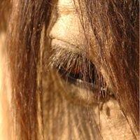 Varden Safaris Horse Riding Safaris - Zimbabwe