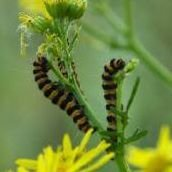 Natuurpunt vlinderwerkgroep Bos van Aa.