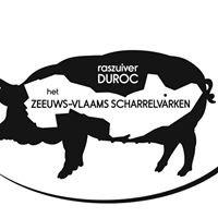 Zeeuwsvlaamse Duroc