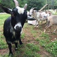 Gronholm Goat Farm