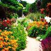 Alowyn Gardens & Nursery