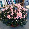 Jacqueline Anne Florist, Penns Flower Nursery