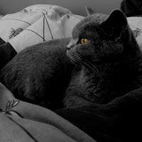 Hodowla Kotów Rasowych Koty z Jury PL/Home Cattery/питомник кошек