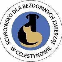Schronisko dla Bezdomnych Zwierząt w Celestynowie-oficjalna strona
