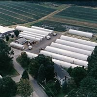 Dargoonian Farms & Greenhouses