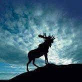 Herndon Moose Lodge #2274