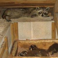 Georgia Pest and Wildlife Specialists