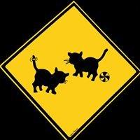 4 Gatos - Espacio de arte