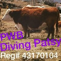 PWB Herefords