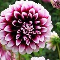 Ogrody Kwiaty Rośliny