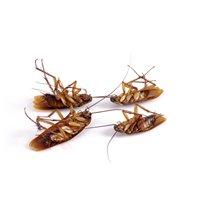 Conquest Pest Control Services Ltd