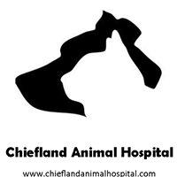 Chiefland Animal Hospital
