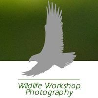 Wildlife Workshop Photography