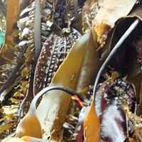 Canadian Kelp Resources