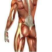 Massotek - Massothérapie et Thérapie du Sport