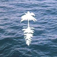 Life of Leisure Surf + Social Club