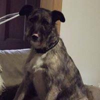 Ararat Dog Rescue