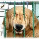 Zöld Menedék Állatvédő Alapítvány - Vác