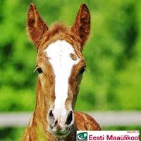 Eesti Maaülikooli hobusekliinik