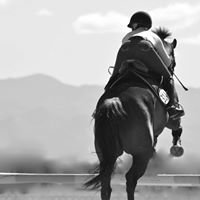 Halo Horses Equestrian Boutique