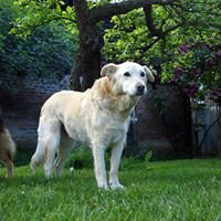 Hundegnadenhof Zemitz e.V. / Sanctuary for Senior Dogs, Zemitz (Germany)