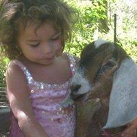 Kid Savvy Dairy Goats