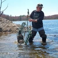 Massachusetts And Vermont  Beaver Trapping Services