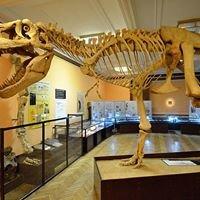 Muzeum Ewolucji Instytutu Paleobiologii Polskiej Akademii Nauk
