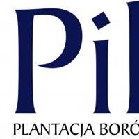 Plantacja borówki amerykańskiej - Pilch