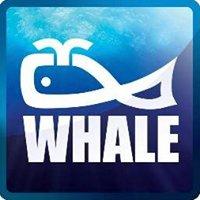 Whale Enterprise PVT Ltd