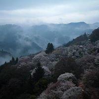 吉野山 Yoshinoyama
