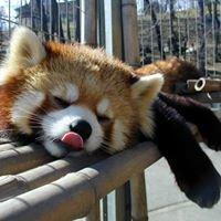 Naganno Chausuyama Zoo