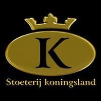 Stoeterij Koningsland Friesians