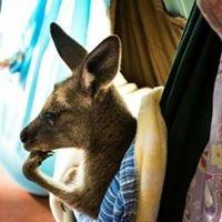 Our Haven Wildlife Shelter Inc                       non profit