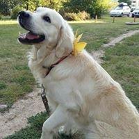 Auksinis šuo