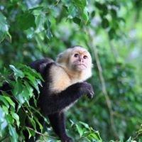 EcoVida Costa Rica