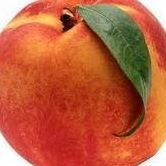 Little Peaches Preschool