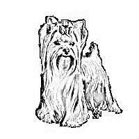 Šunų kirpykla