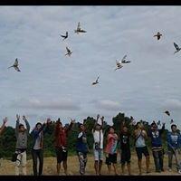 Birds Free Flight