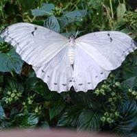 Allgäuer Schmetterling-Erlebniswelt