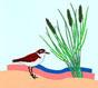 Punta Aderci - Riserva Naturale-Vasto