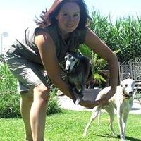 Hunde-Funpark und Windhundetreffpunkt am Chiemsee