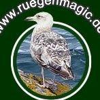 ruegenmagic.de - Urlaubstipps und Ferienunterkünfte der Insel Rügen